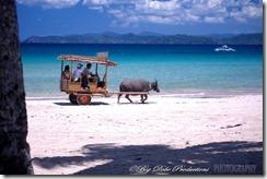 Sabang Beach Carabao